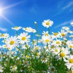 50 คำศัพท์ภาษาอังกฤษเกี่ยวกับดอกไม้
